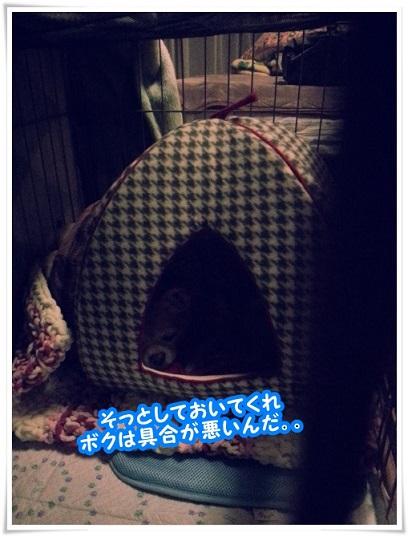 20131225_230955sottosite.jpg