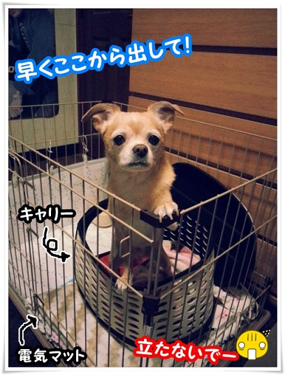 20140112_213248dasite.jpg