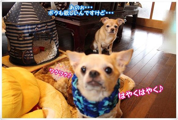 IMG_4268bokumo.jpg