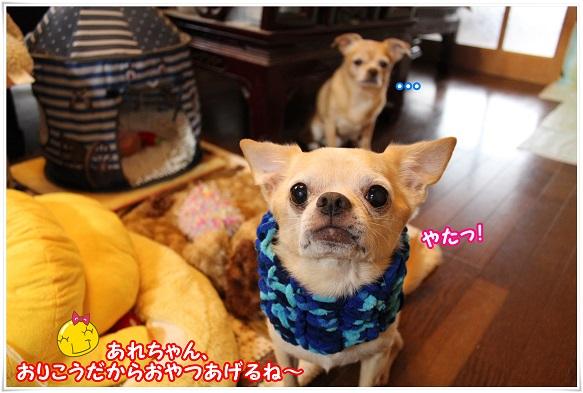 IMG_4269gohoubi.jpg