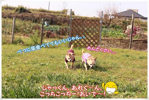 IMG_4341yarukinasi.jpg