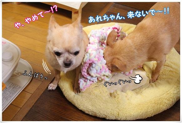 IMG_4378yamete.jpg