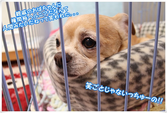 IMG_4441waraigoto.jpg