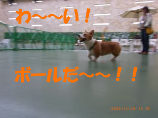 RIMG0588_320.jpg