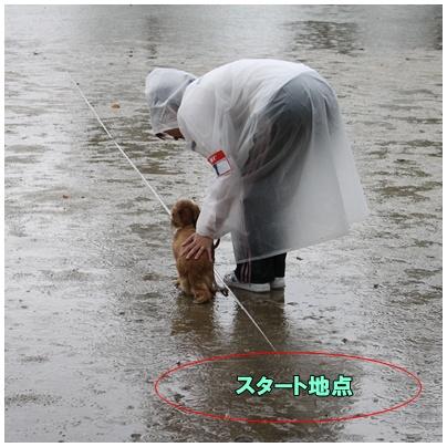 雨の中の競技会