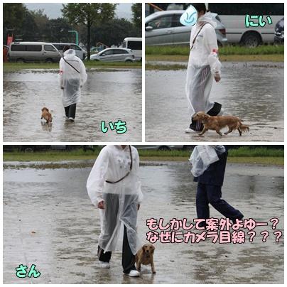雨の中の競技会3