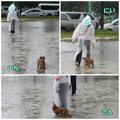 雨の中の競技会4