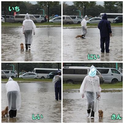 雨の中の競技会2