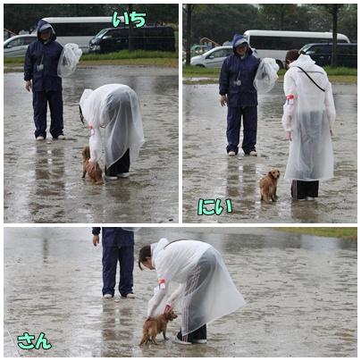 雨の中の競技会5