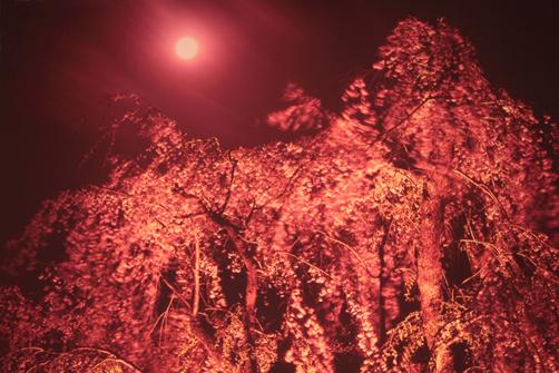 ギャラリー・花の桜と美風景・2