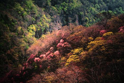 ギャラリー・花の桜と美風景・4