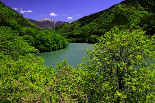 若葉彩る残雪の三ノ沢岳