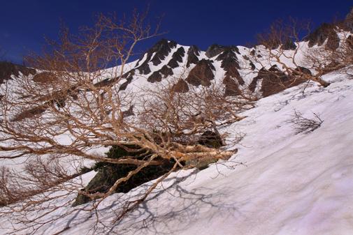 ダケカンバに残雪映える峰