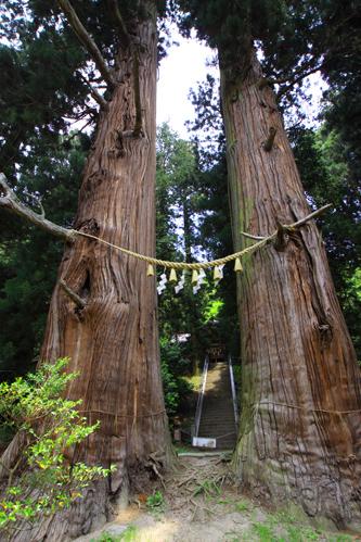 諏訪神社の二本杉