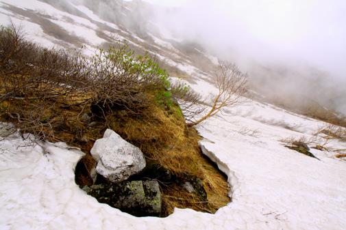 4・②残雪に映える芽吹くナナカマド