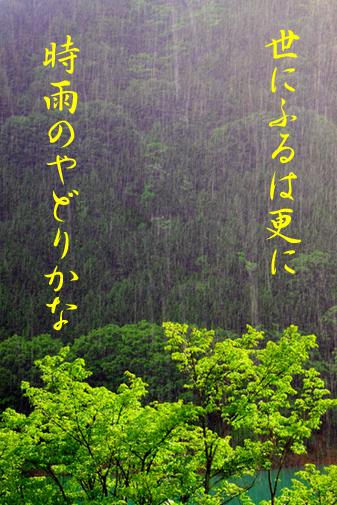 若葉と降雨のコピー
