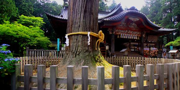 浅間神社の社殿と御神木