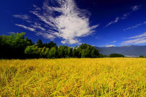稲穂に雲と宝剣岳