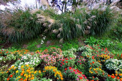 ススキと秋の花