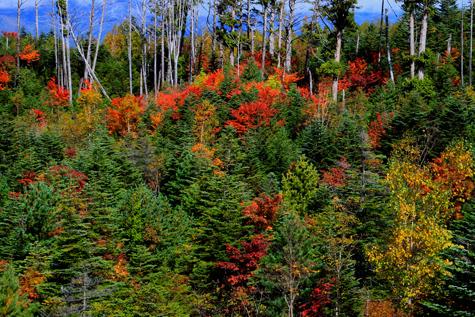 木、それぞれの紅葉