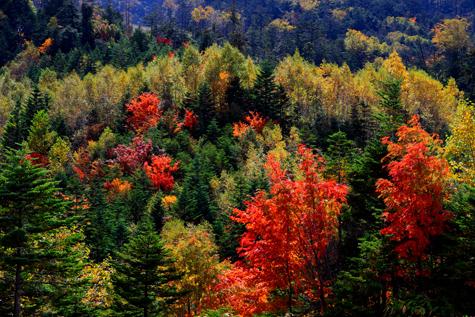 逆光に輝く紅葉の木々