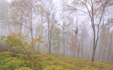 霧の晩秋の林・1