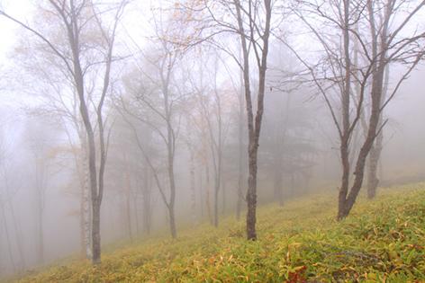 霧の晩秋の林・2