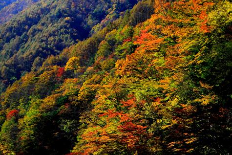 与田切渓谷の紅葉