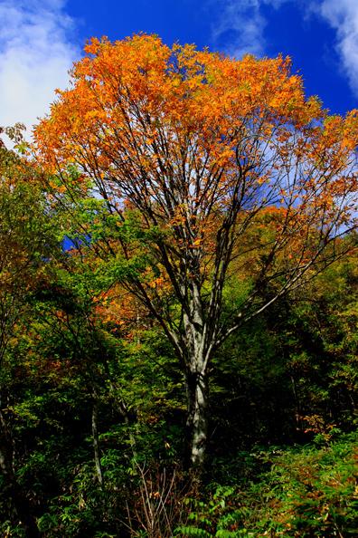 紅葉彩る大樹