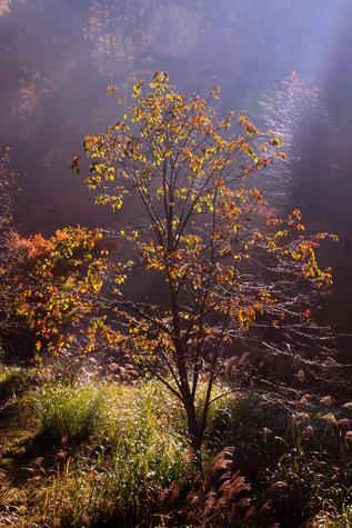 紅葉の木ひかる・タテ