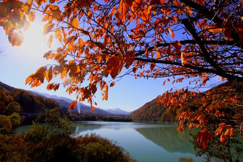 桜の紅葉と美和ダム湖