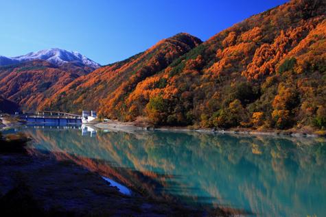 黄葉たけなわの美和ダム湖の上流