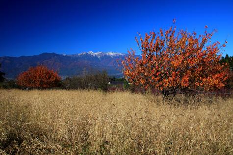 紅葉と新雪の山並み