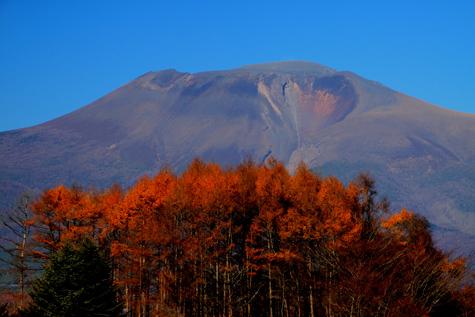 カラマツの黄葉と浅間山