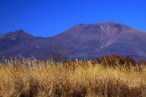 ススキと浅間山