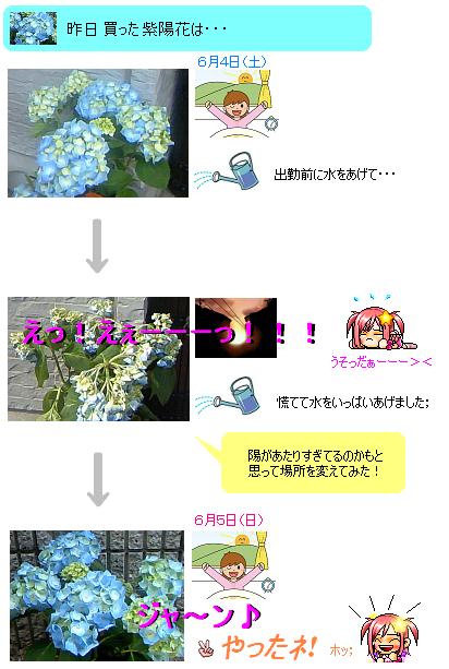 日記6.4紫陽花