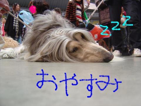 DSC07617zzz_convert_20100208114919.jpg