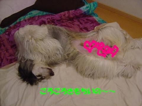 DSC08469_convert_20100526234116.jpg