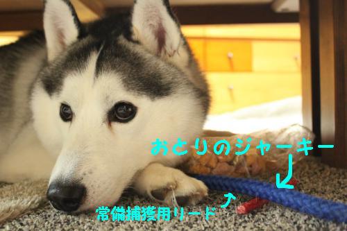 006_convert_20100421223108.jpg