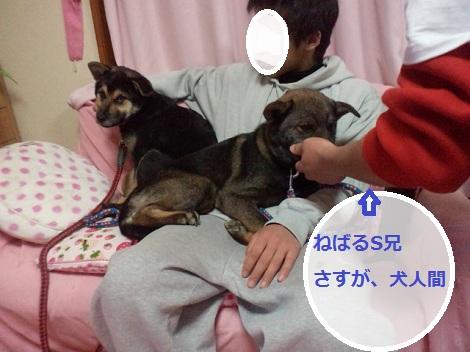 2012012920440002.jpg