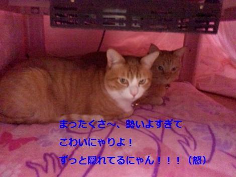 2012013120360000.jpg