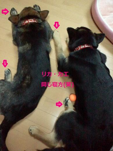 2012020722290000.jpg