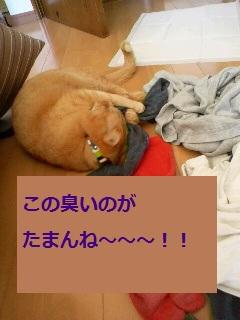 2012032511300000.jpg