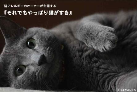 それでもやっぱり猫がすき ブログ用