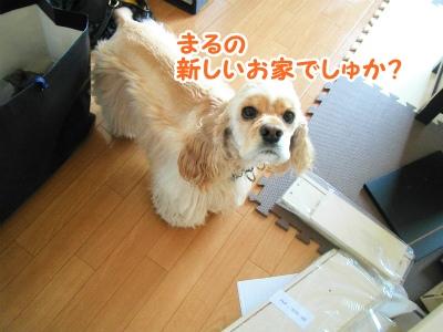 002_20120408170901.jpg