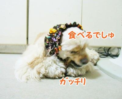076_20120413222751.jpg