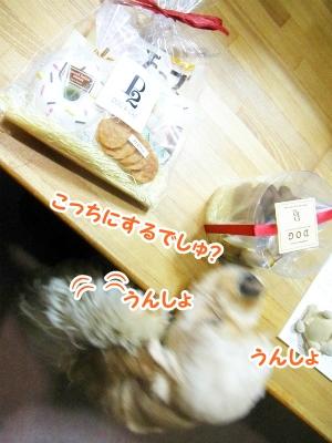 091_20120408233225.jpg
