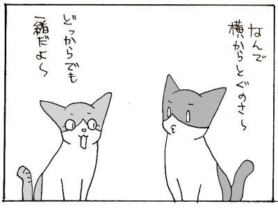 335-6.jpg