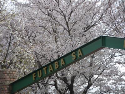 双葉SAの桜