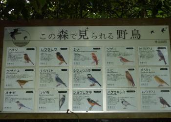 鳥サン一覧